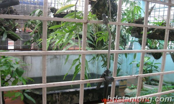 House with garage in Nghi Tam street, Tay Ho for rent 2